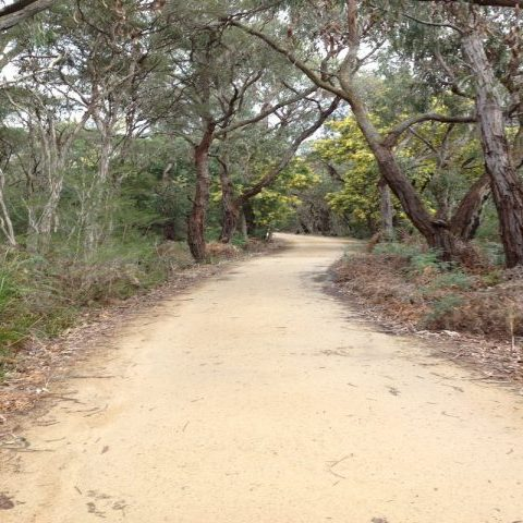 Cranbourne Botanical Gardens Walking track