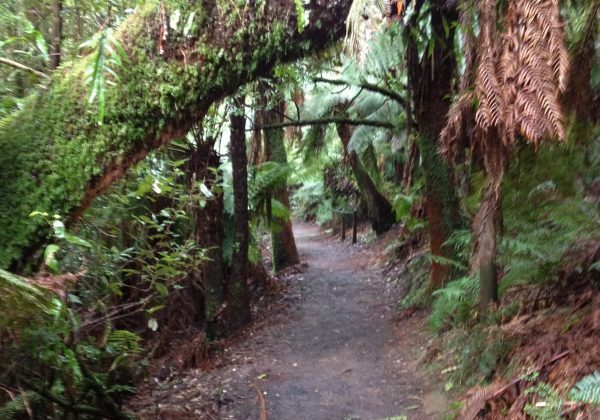 Hardy Gully Nature Walk - Dandenong Ranges National Park