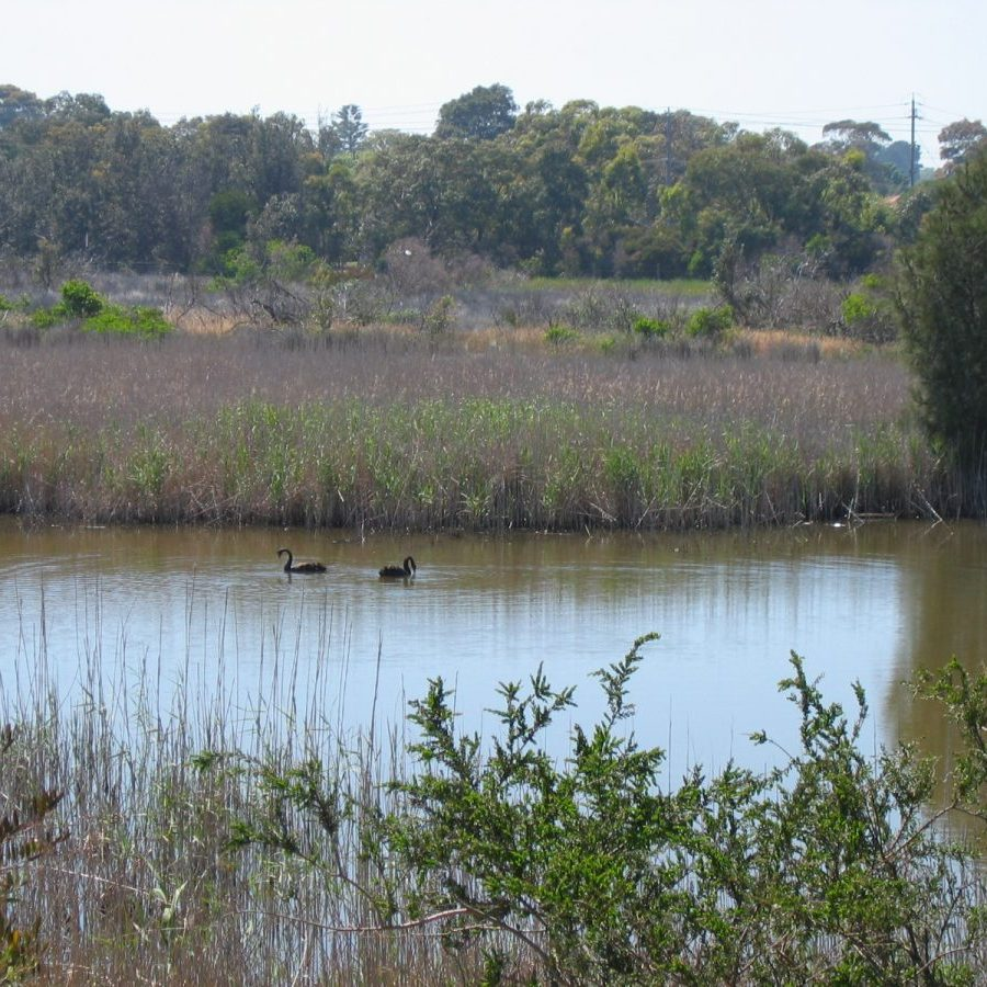 Seaford_Wetlands_3